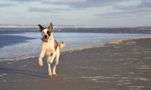 fotoshoot hond hondenlevens Terschelling - Hall Terschelling