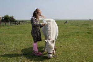 Pony aaien Kinderboerderij Het Hooivak Hallo Terschelling