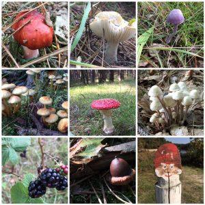 kabouterpad-herfst-Hallo-Terschelling