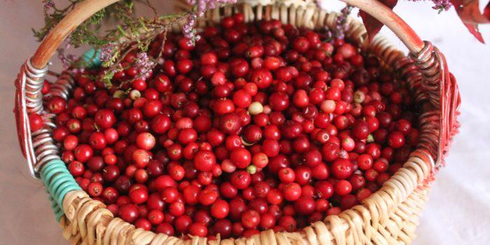 Cranberry napluk op Terschelling – Hallo Terschelling