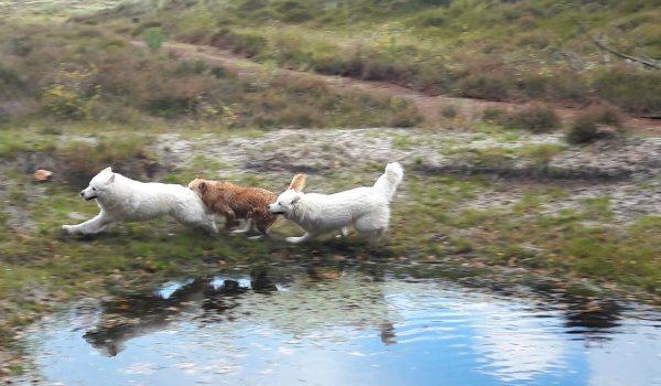 hondenleven op Terschelling – Hallo Terschelling